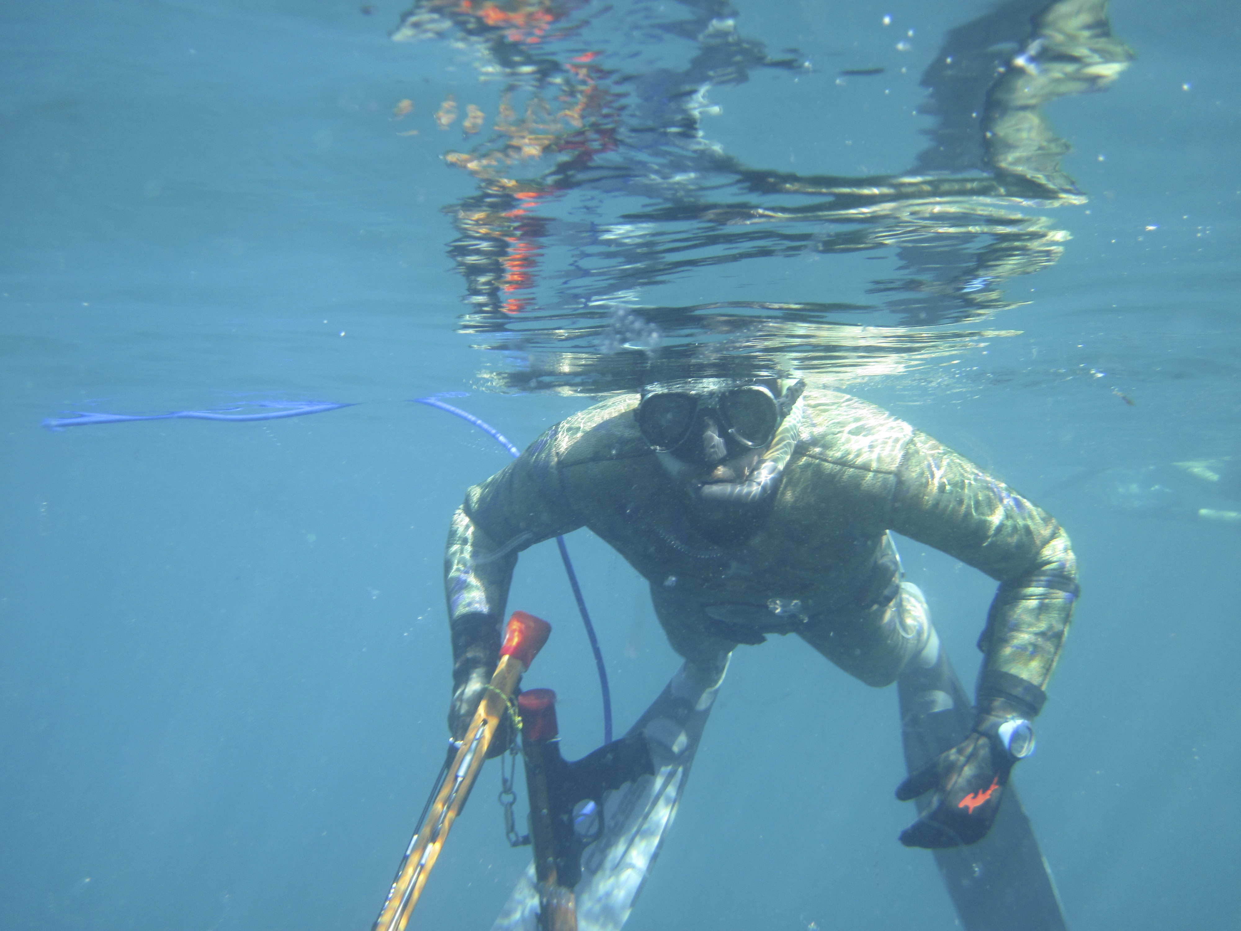 spearfishing at the Channel Islands